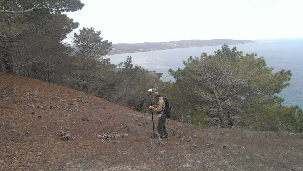 Mapping tree distribution with a submeter GPS in January of 2015 on the western slope of Kendall Mountain, Santa Rosa Islands, CA.